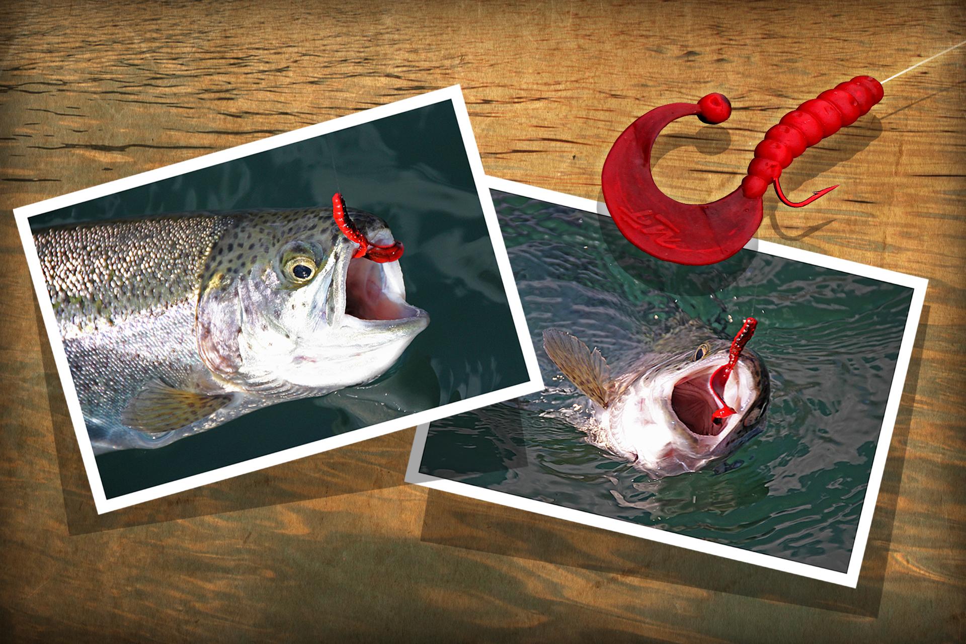 mit sbirolino und twister angeln am forellensee dr catch besser angeln. Black Bedroom Furniture Sets. Home Design Ideas