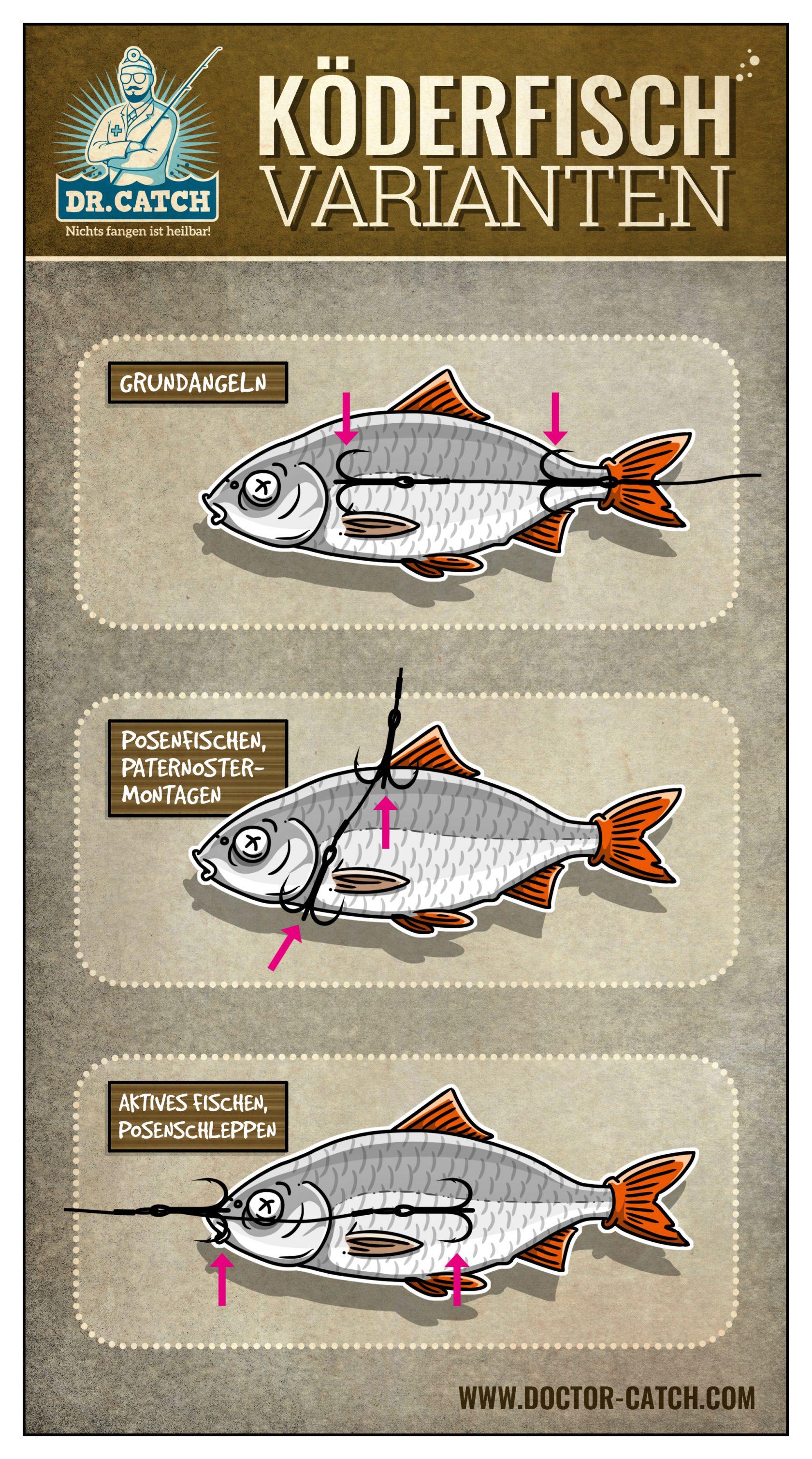 Hecht angeln mit Köderfisch