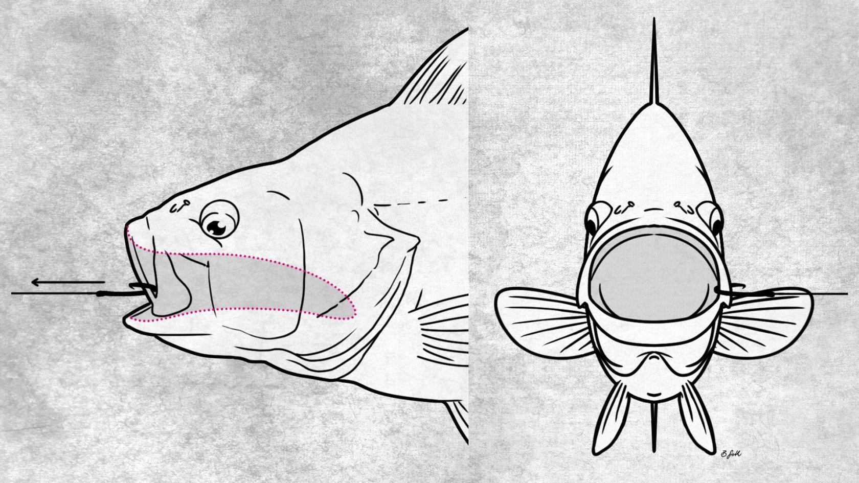 Fischverluste sind selten mit Kreishaken