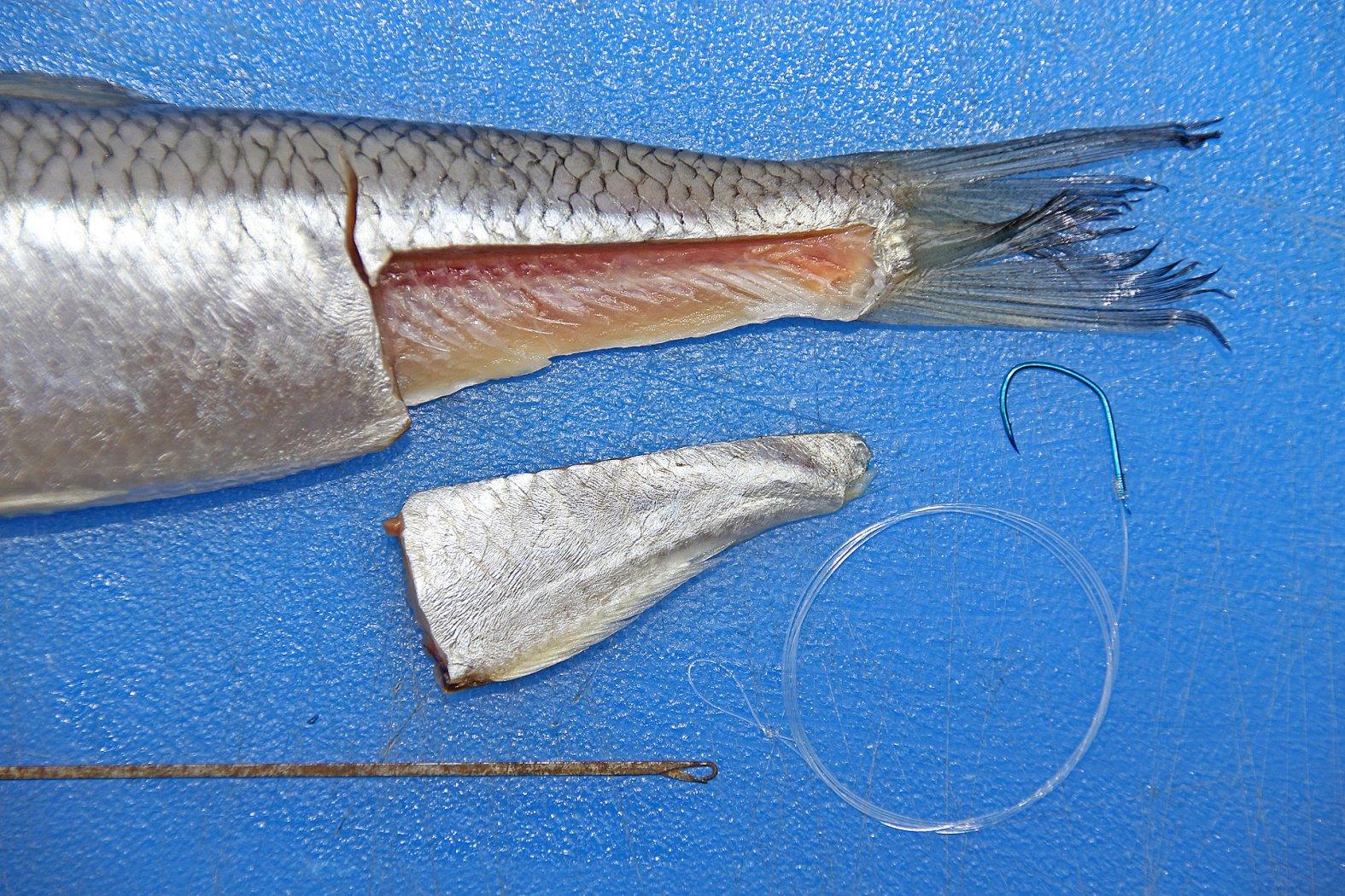 angeln mit heringsfetzen