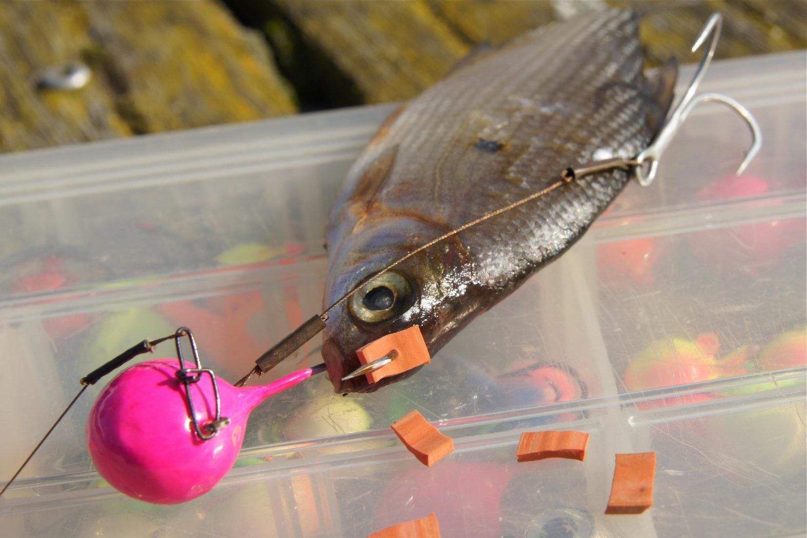 Köderfisch am Fireball Jig montieren