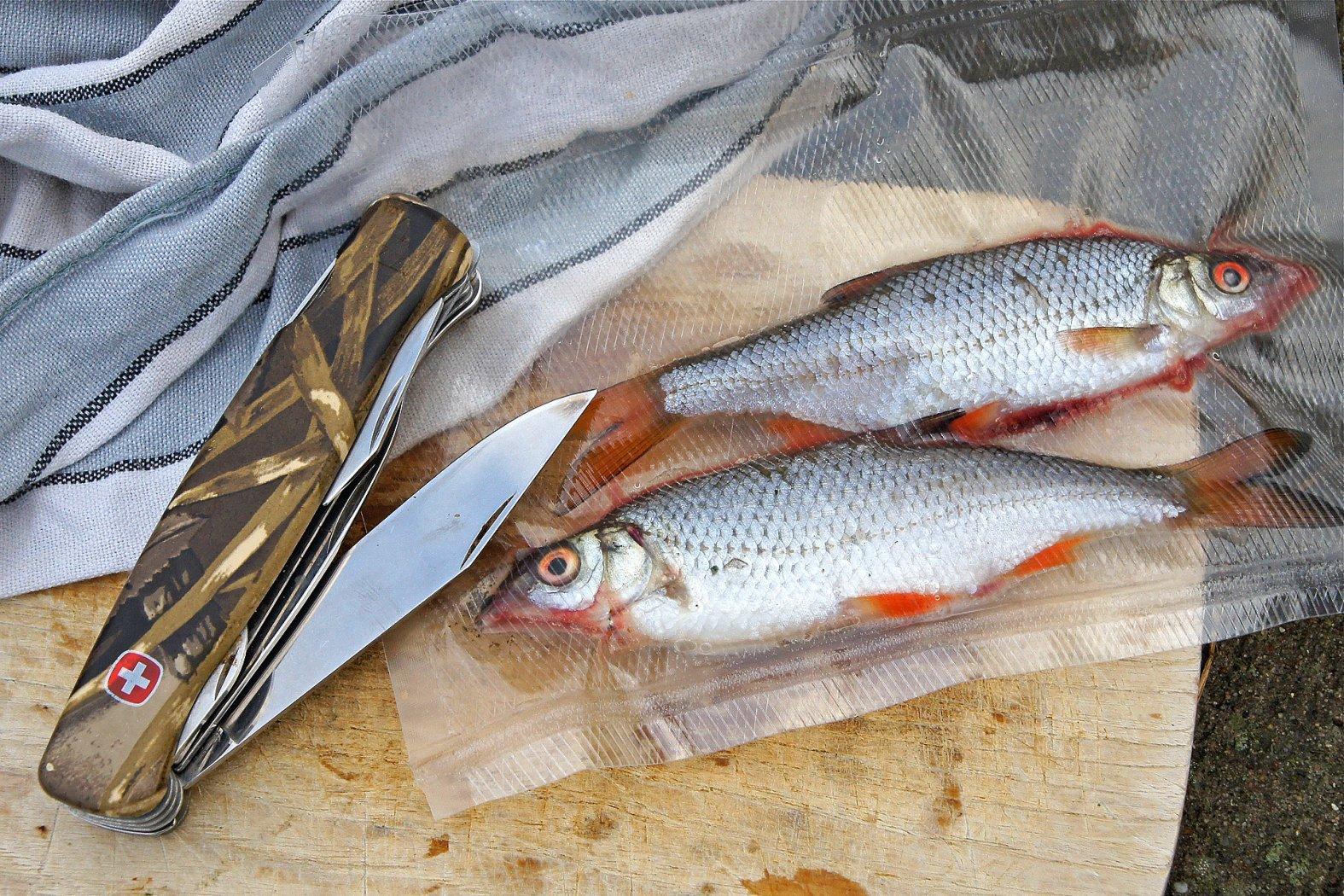 Zubehör zum Grundangeln mit Köderfisch