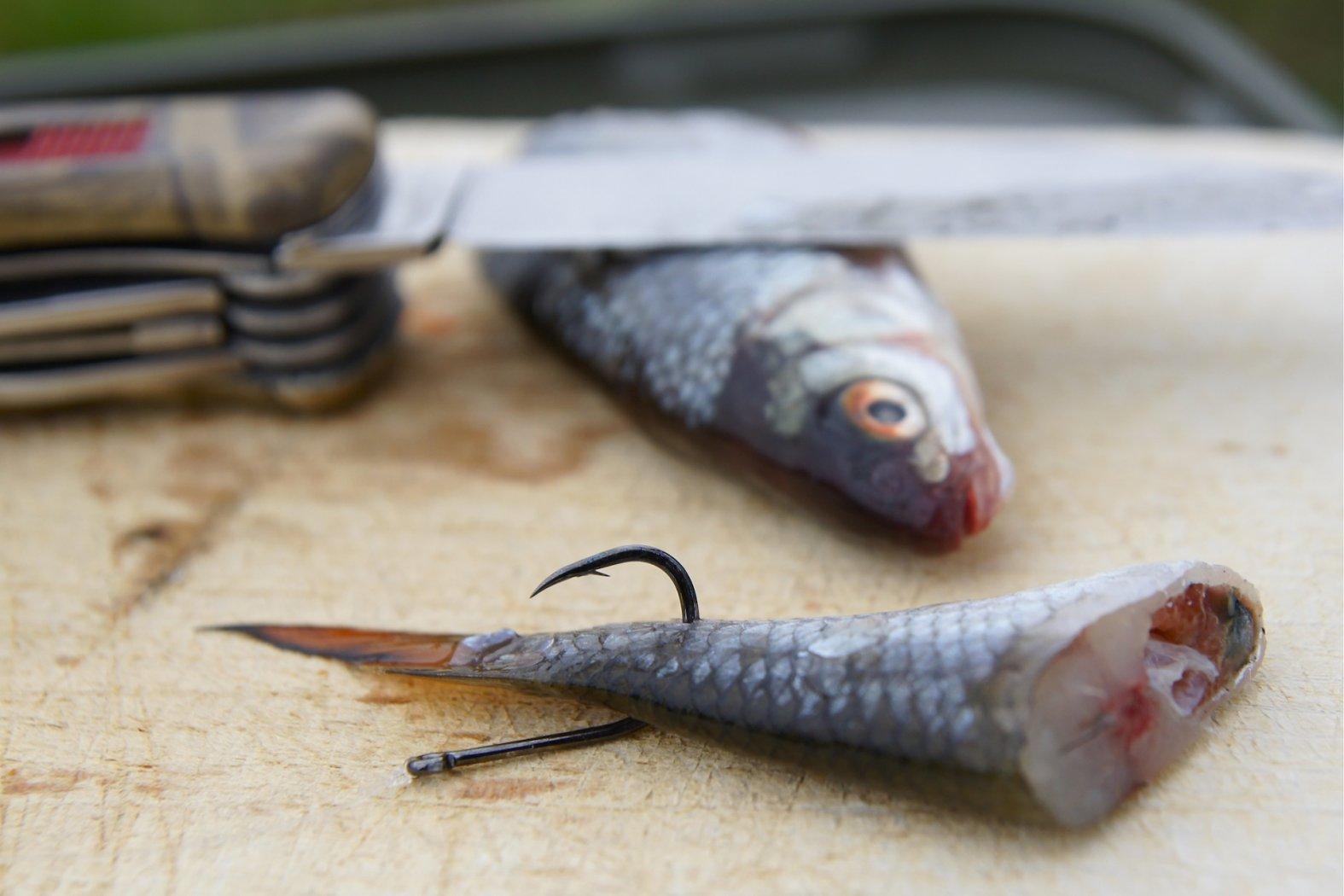 Zanderangeln mit Fischfetzen