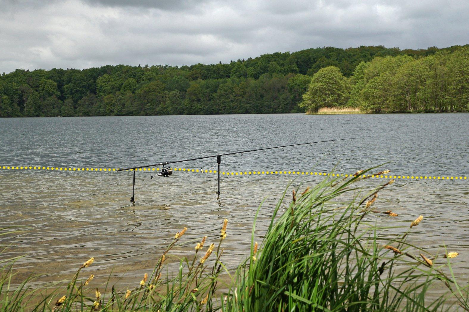 Hotspot für Karpfen: Uferkante