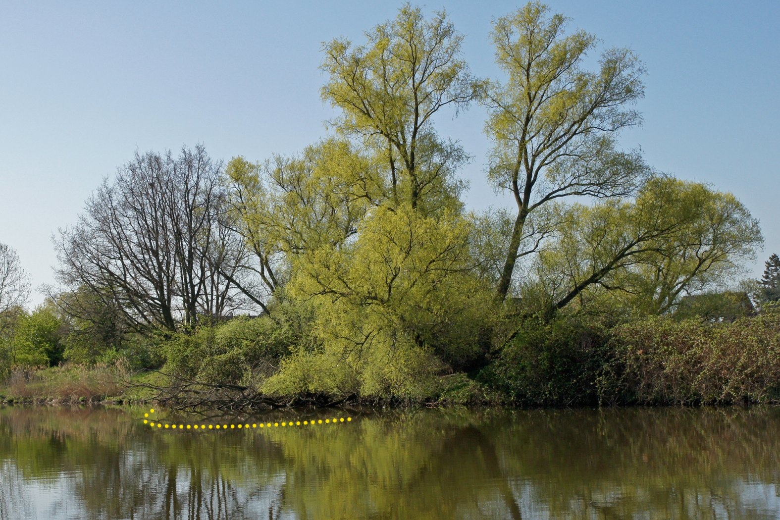 Überhängende Büsche und Bäume