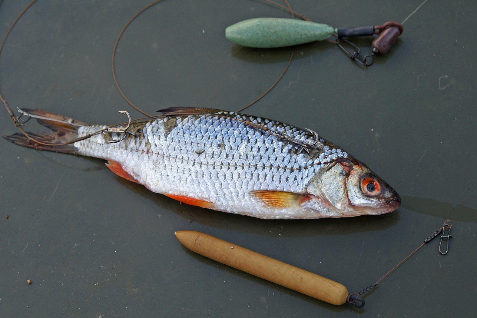 Auftriebshilfe für Köderfische