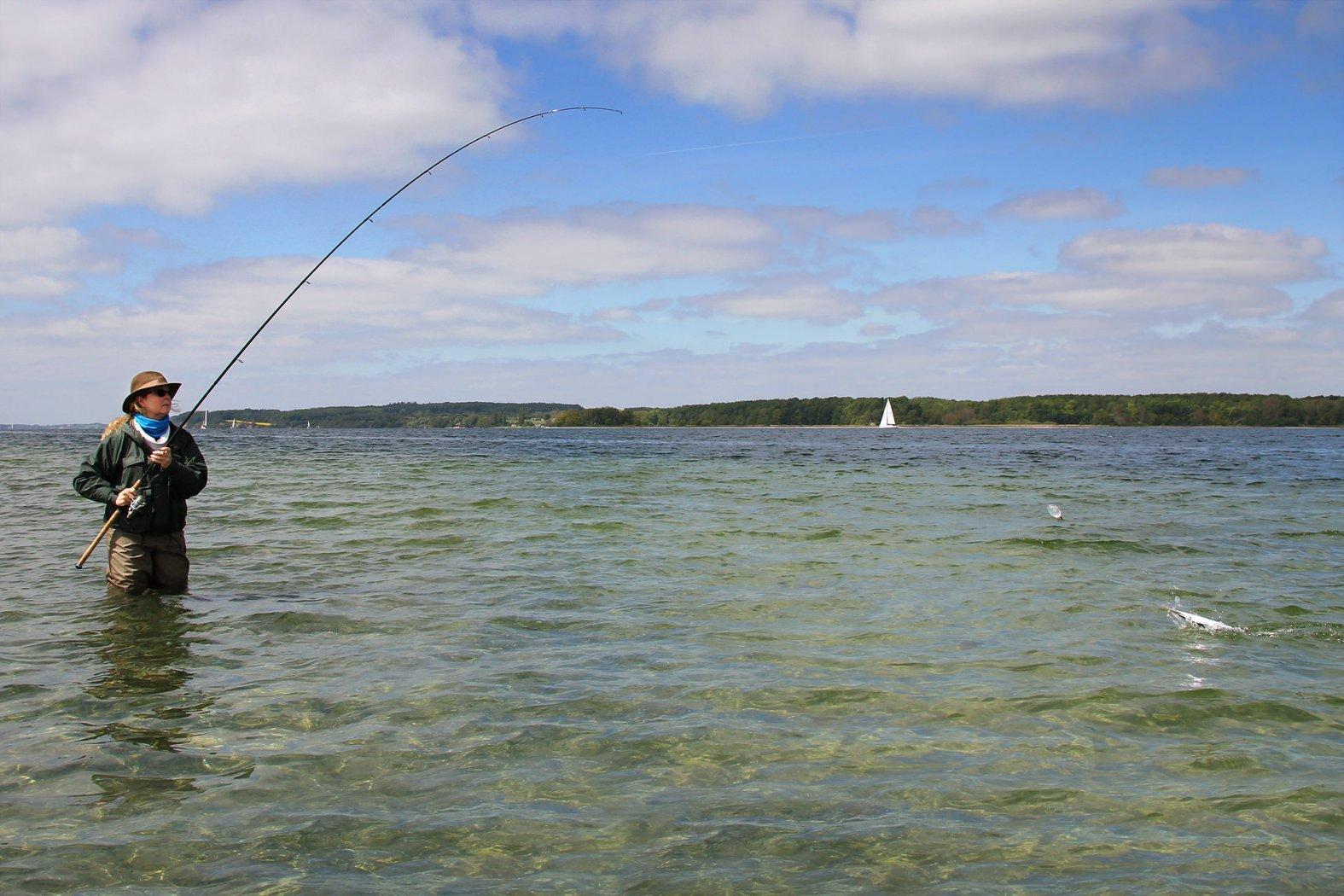 hornhecht angeln mit fischfetzen