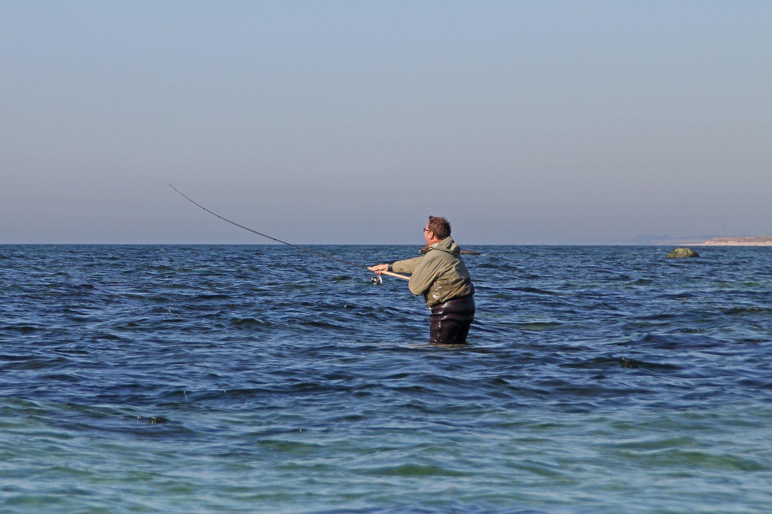 sbirolino angeln auf meerforelle