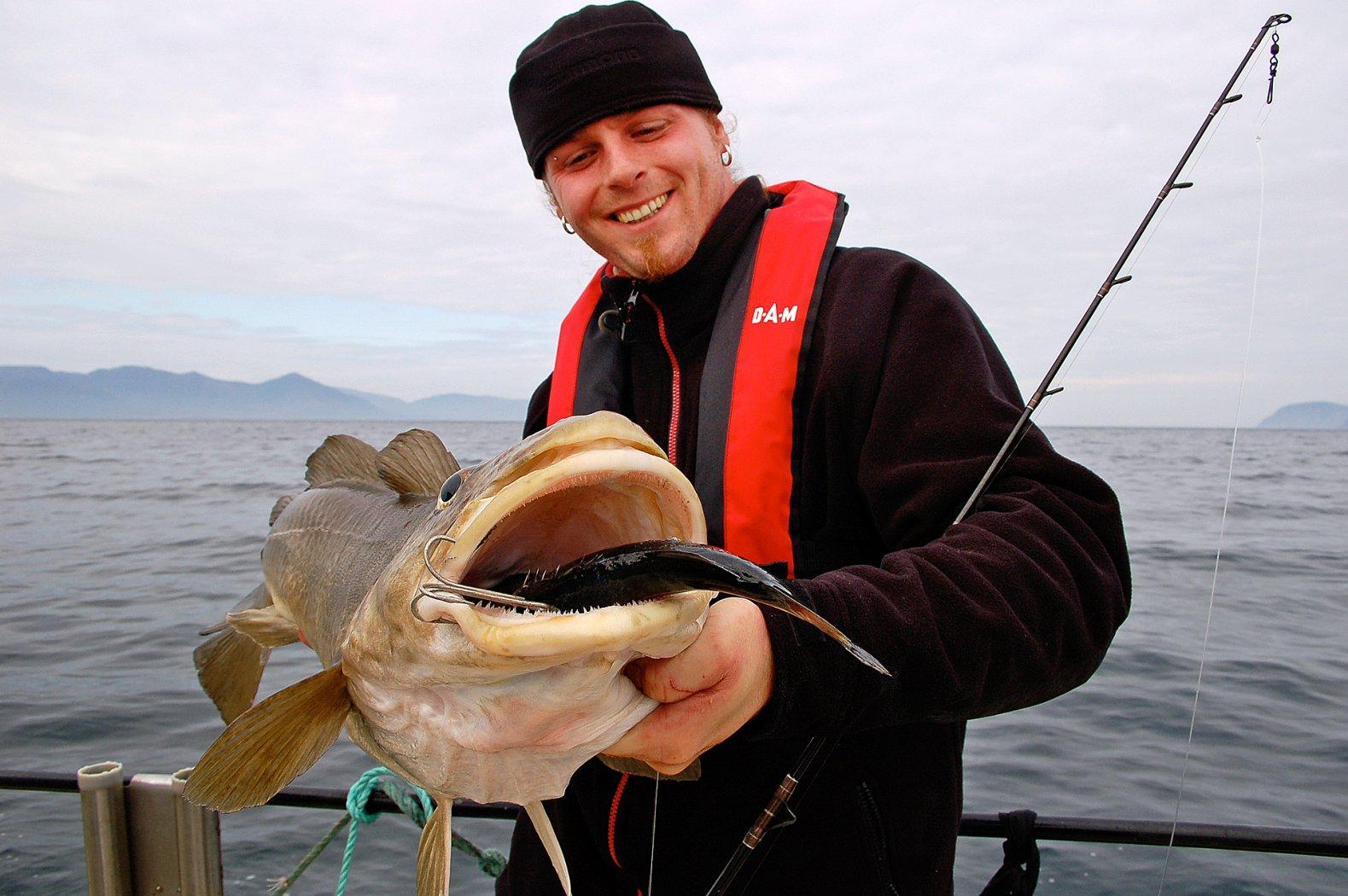 Toller Dorsch auf Köderfisch