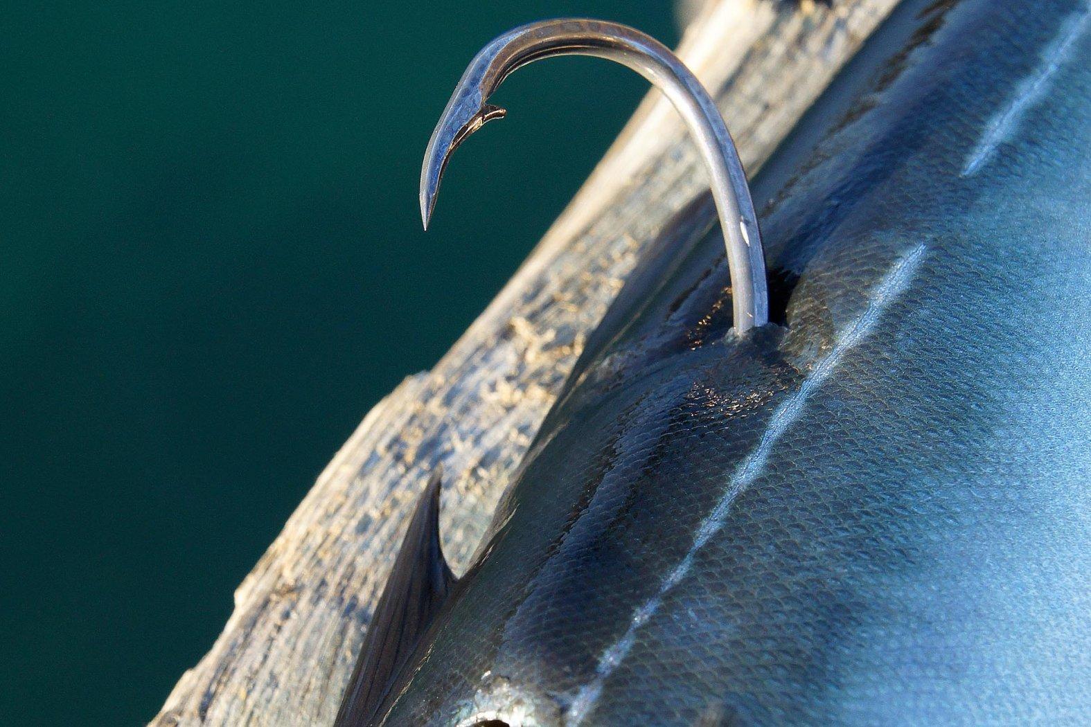 Mit Köderfisch auf Dorsch und Heilbutt