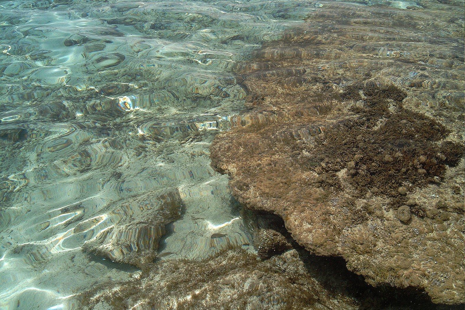 Oktopusversteck im flachen Wasser