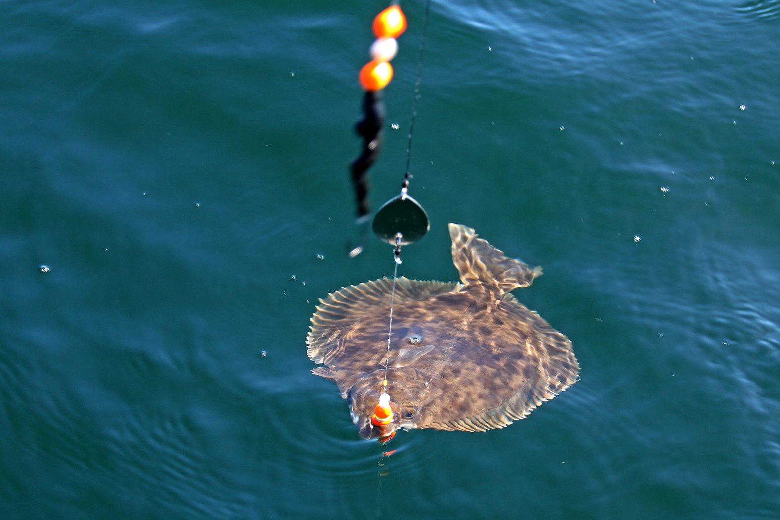 Montagen zum Flunder angeln