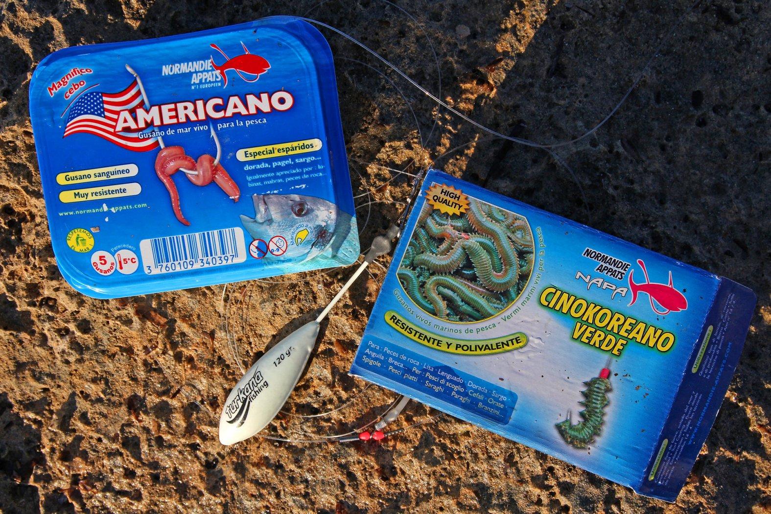 seeringelwürmer in spanien kaufen