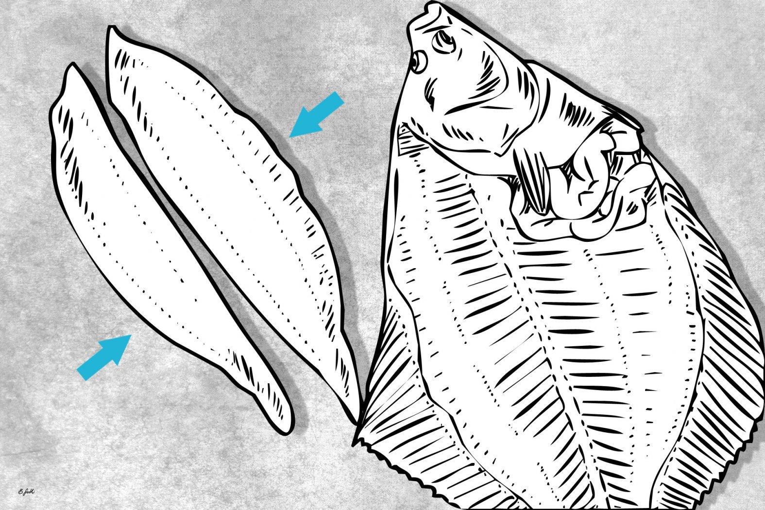 plattfisch perfekt filetiert