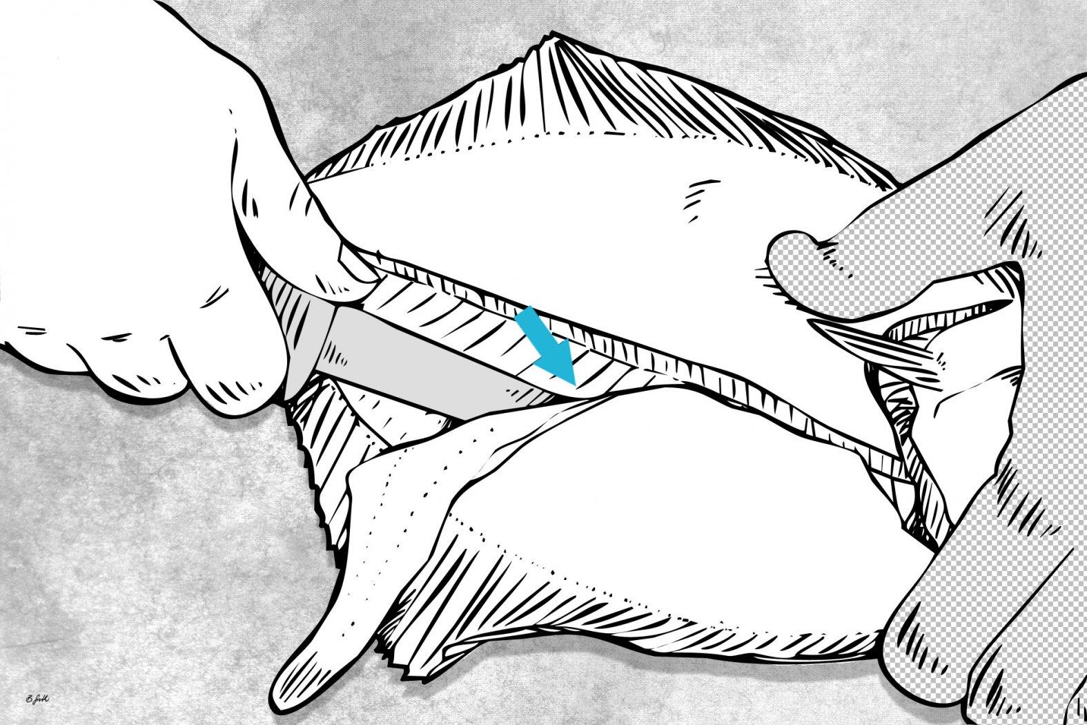 plattfisch richtig filetieren