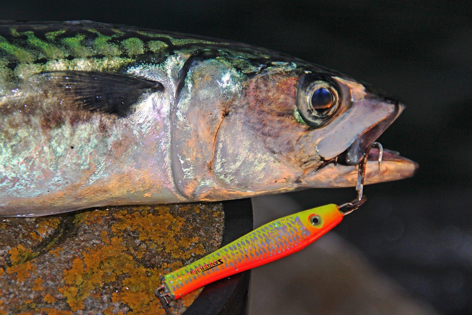 Makrelenangeln mit Pilker