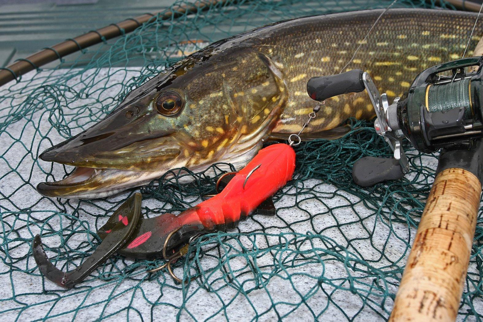 Swimbait angeln auf Hecht