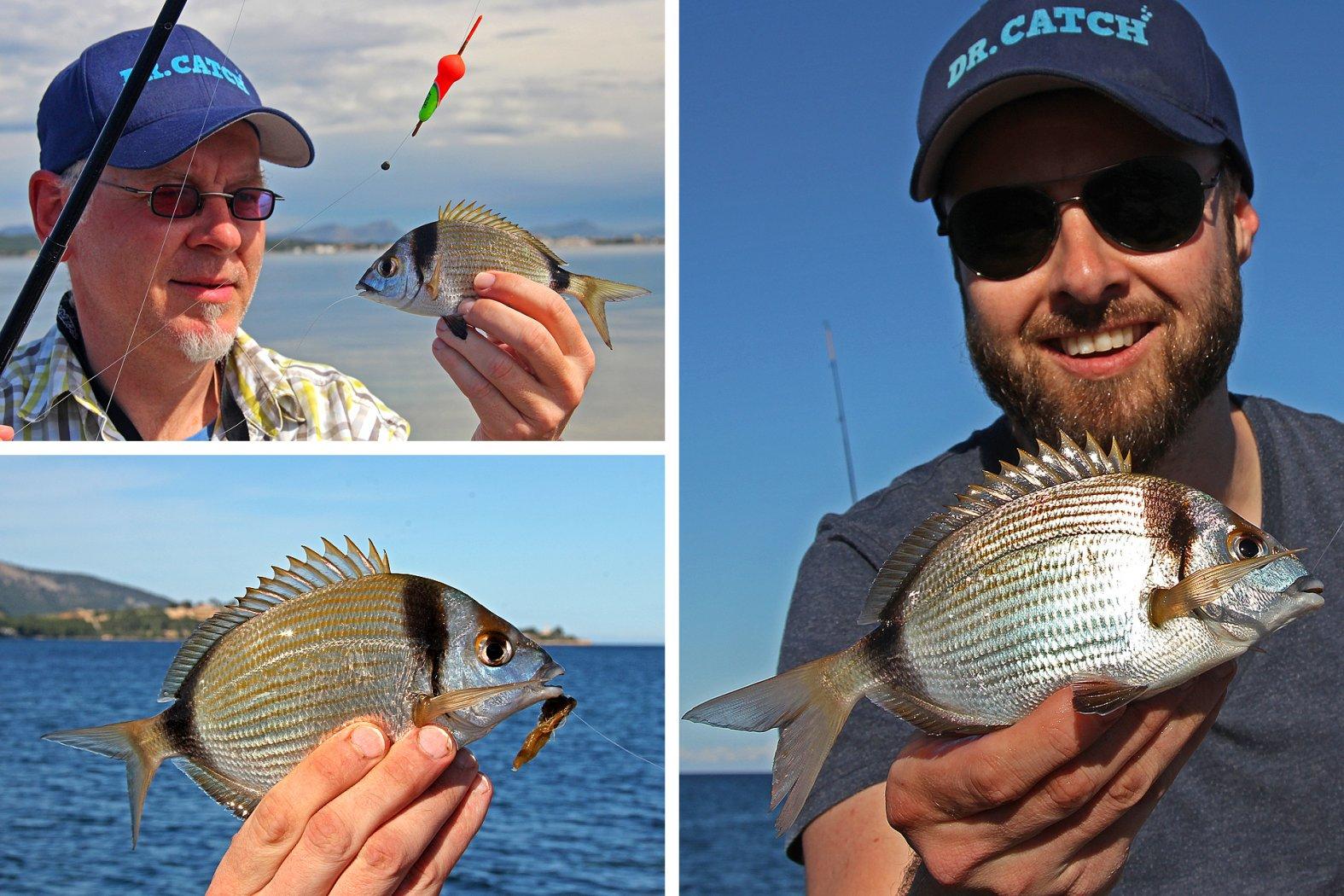 Zweibindenbrassen angeln