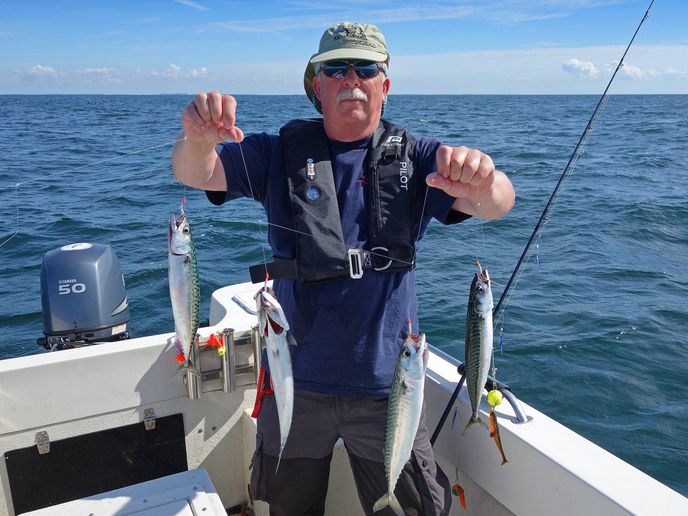 Makrelen angeln vor Langeland