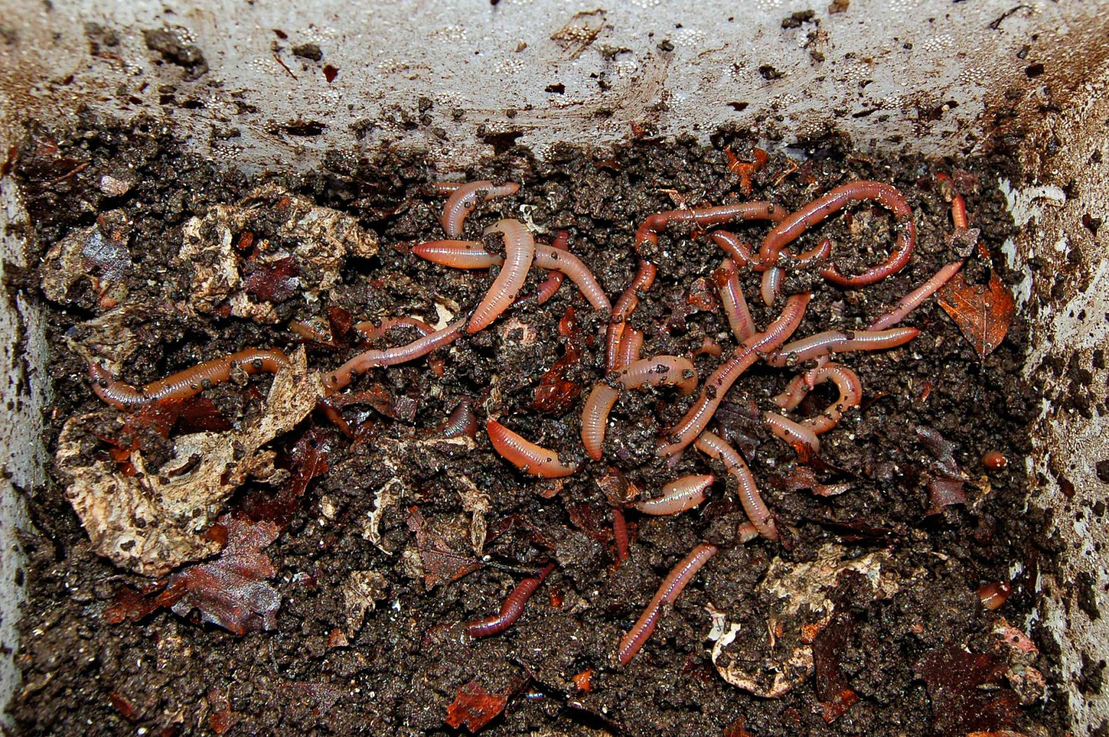 Tauwürmer lagern