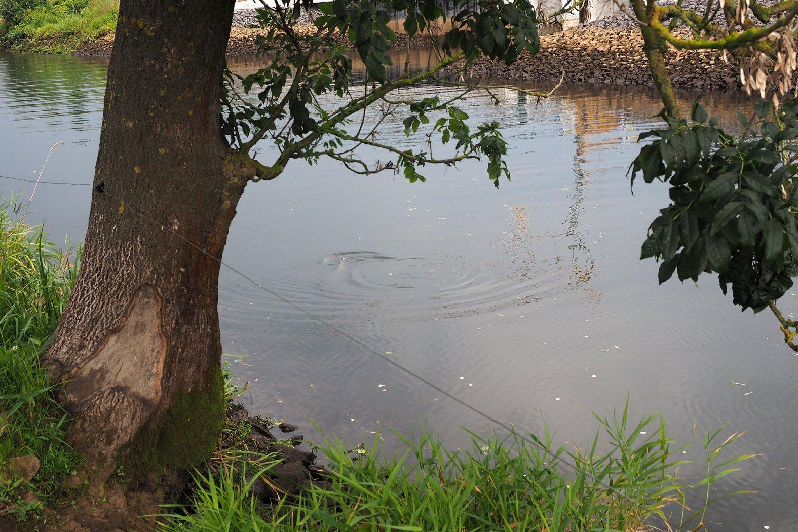 Aland angeln an der Oberfläche