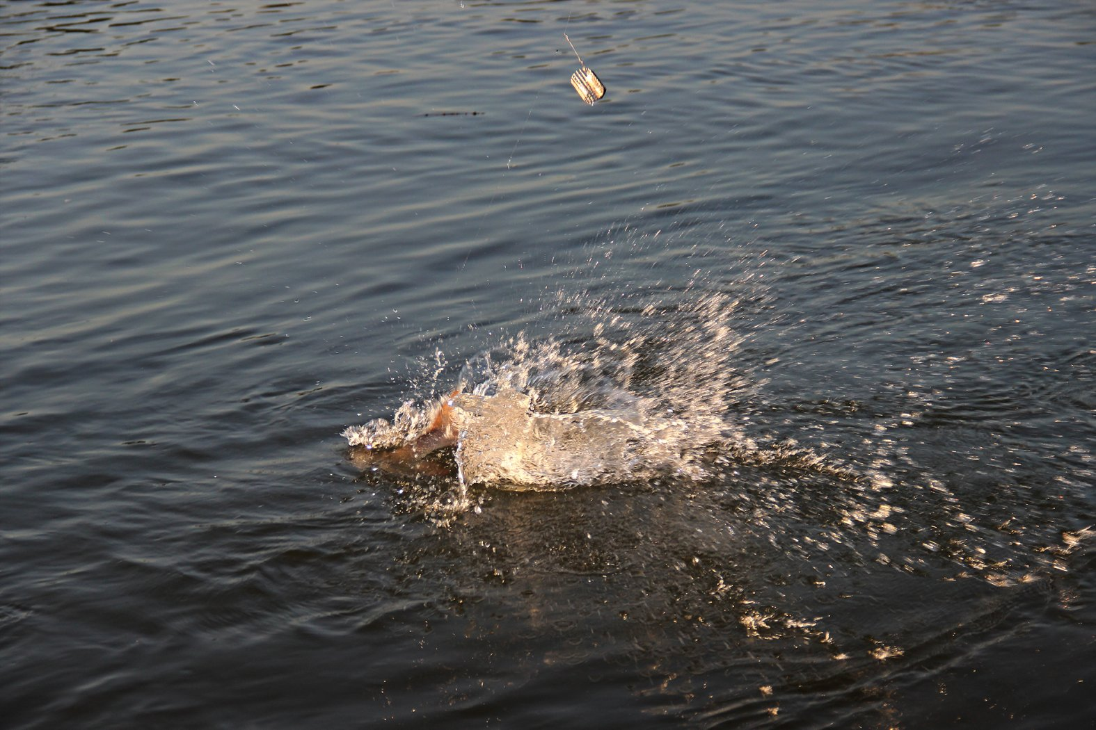 Barben fangen im Fluss