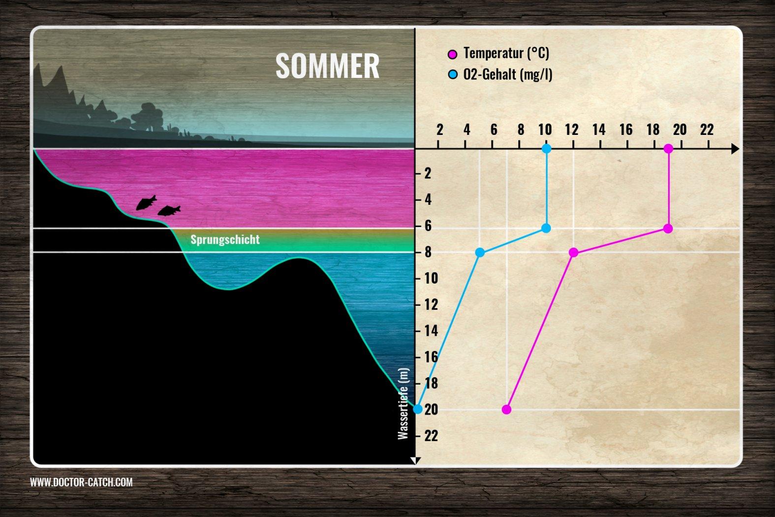 Die Sprungschicht im Sommer