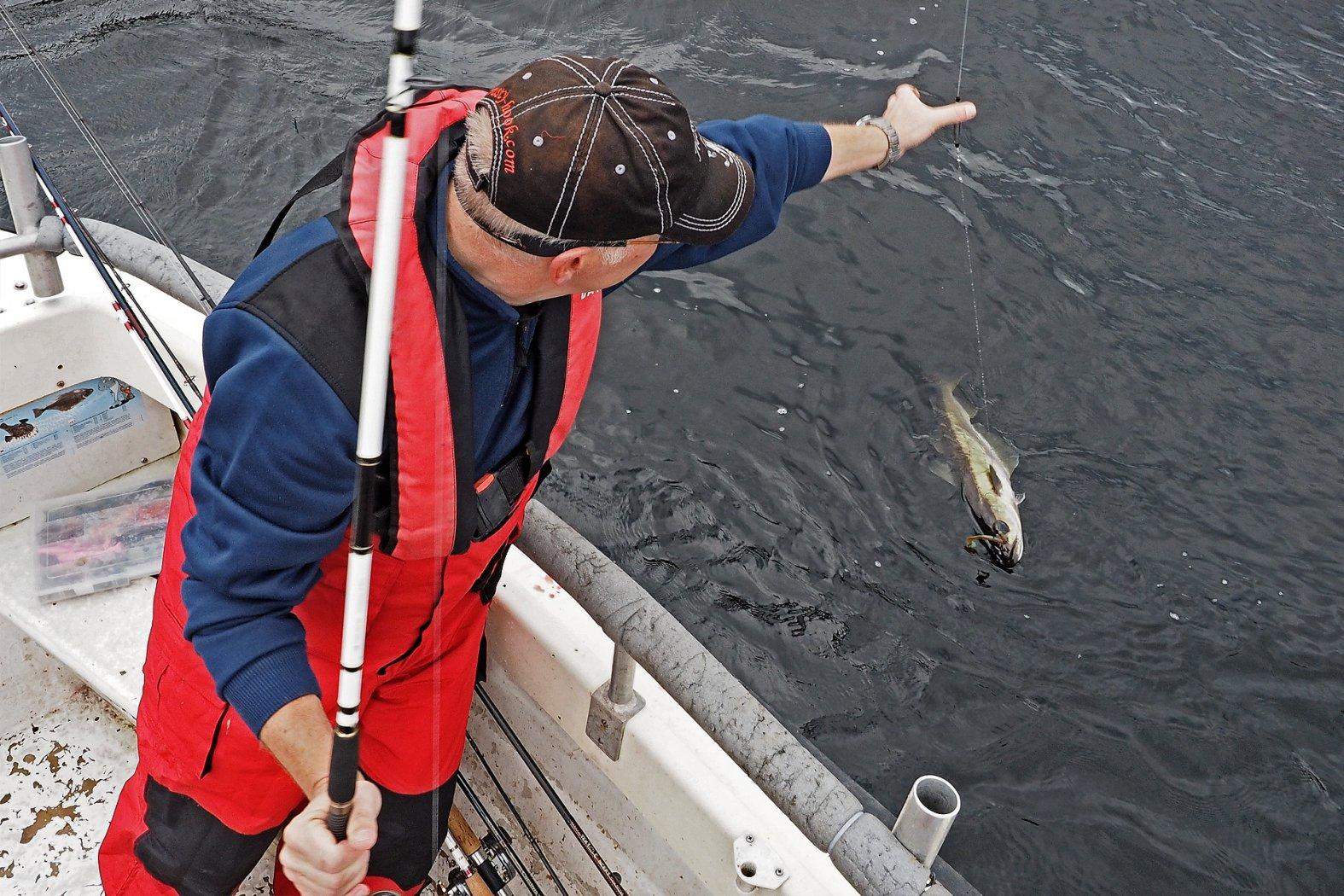 Pollack angeln vom Boot