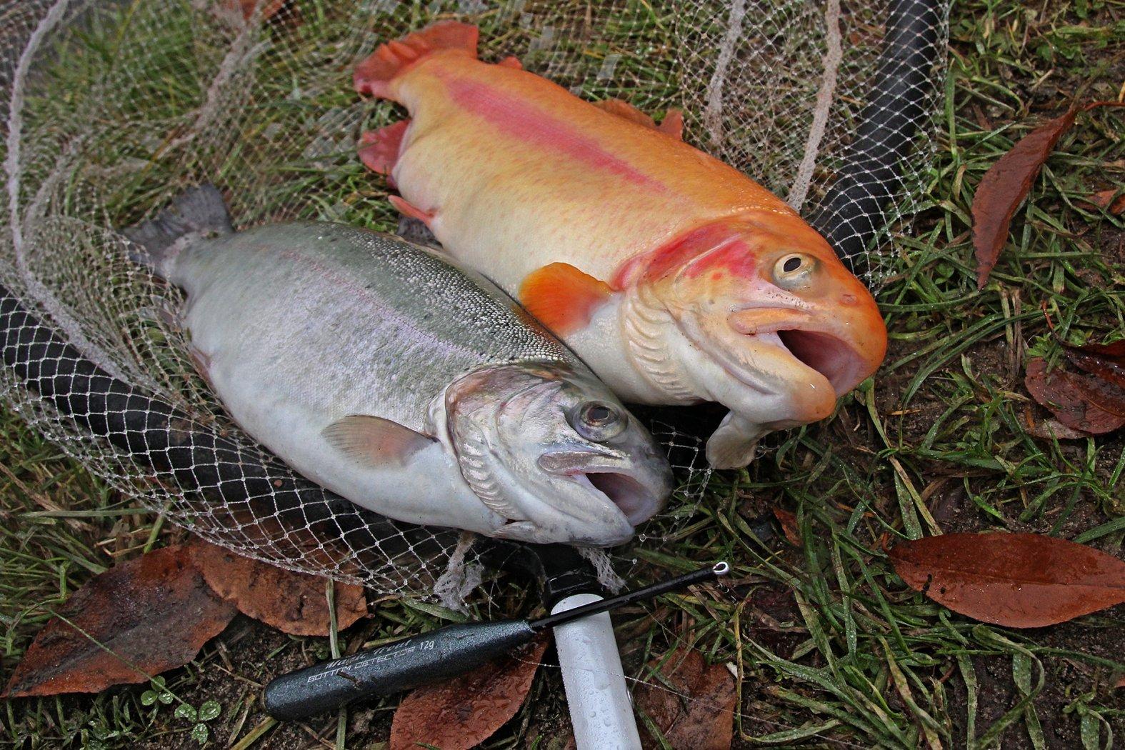 Bodentaster zum Forellen angeln