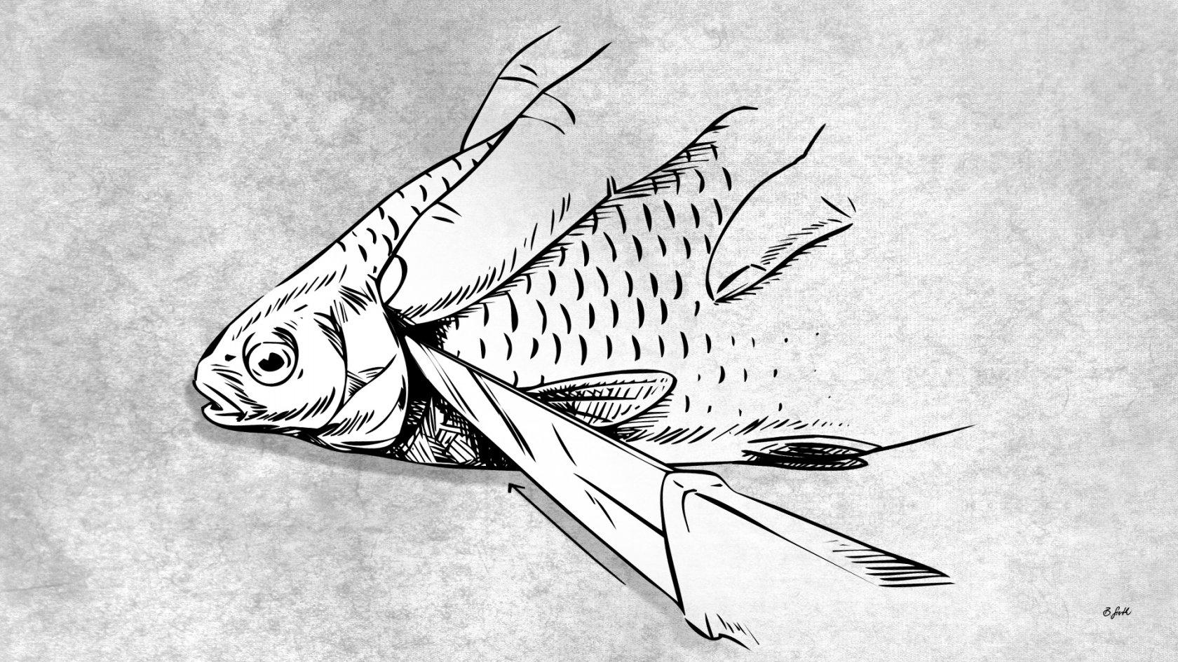 Fisch töten durch Kiemenschnitt