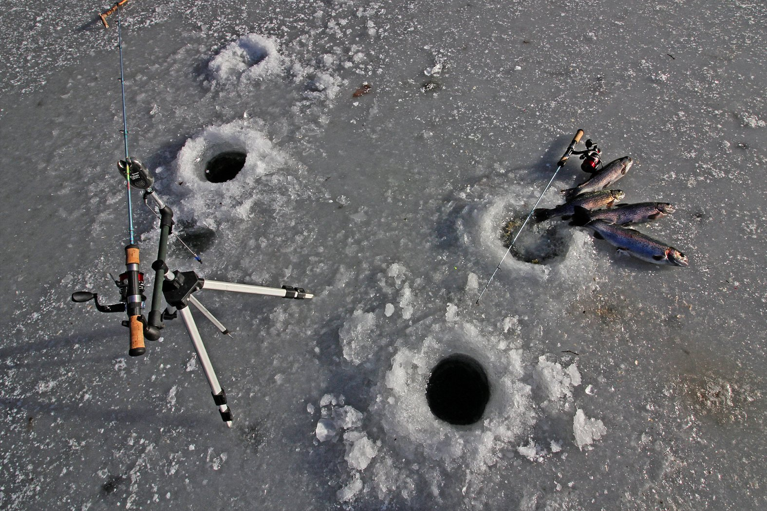 Tipps zum Eisangeln auf Forellen