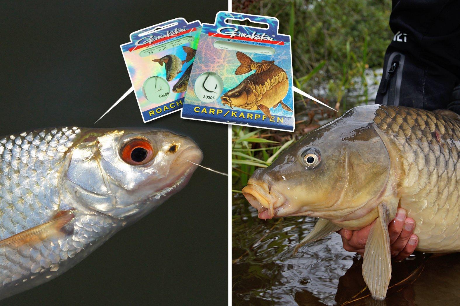 Welcher Haken für welchen Fisch
