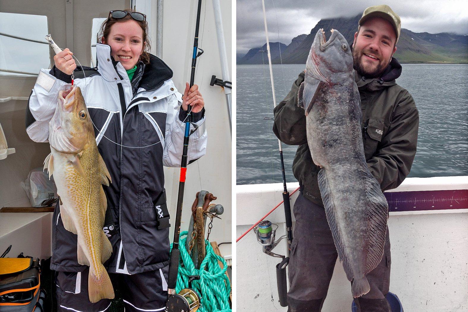 In Island auf Dorsch und Steinbeißer angeln
