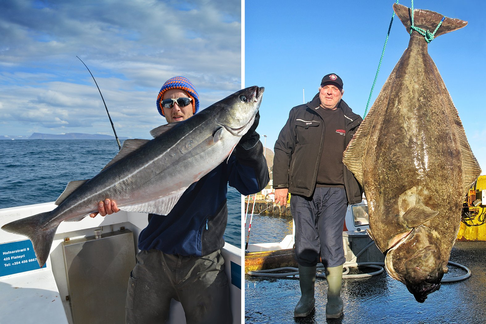 Köhler und Heilbutt angeln in Island