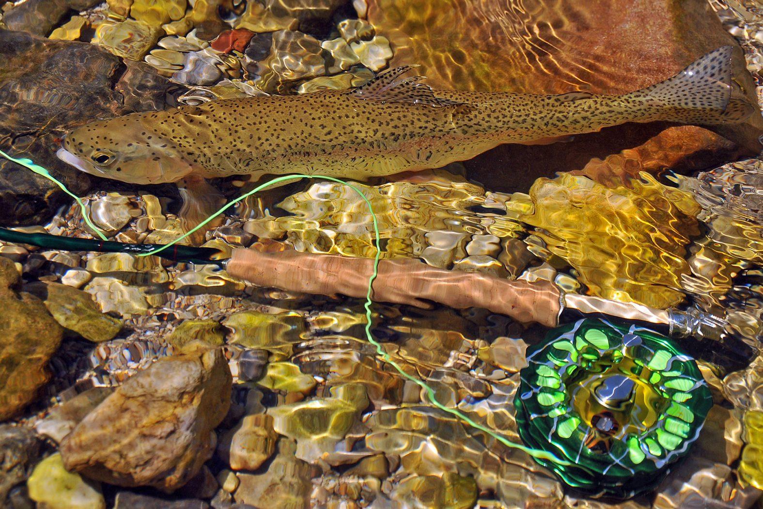 Fliegenfischen auf Regenbogenforelle