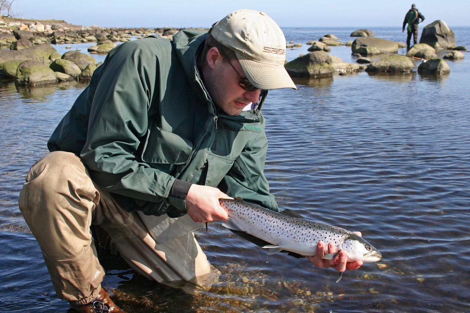 Fliegenfischen auf Meerforelle in der Ostsee