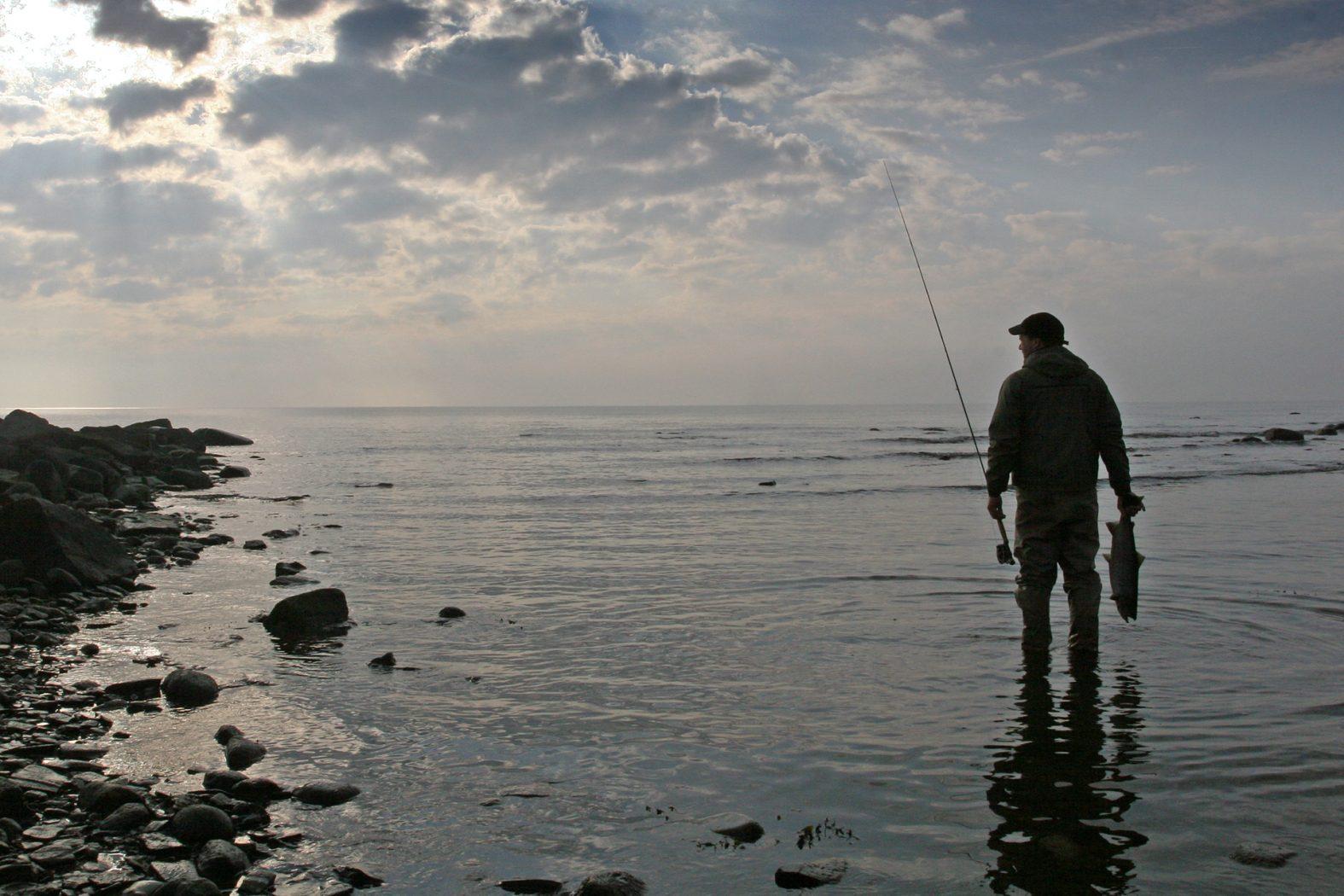 Erfolgreiches Fliegenfischen auf Meerforelle