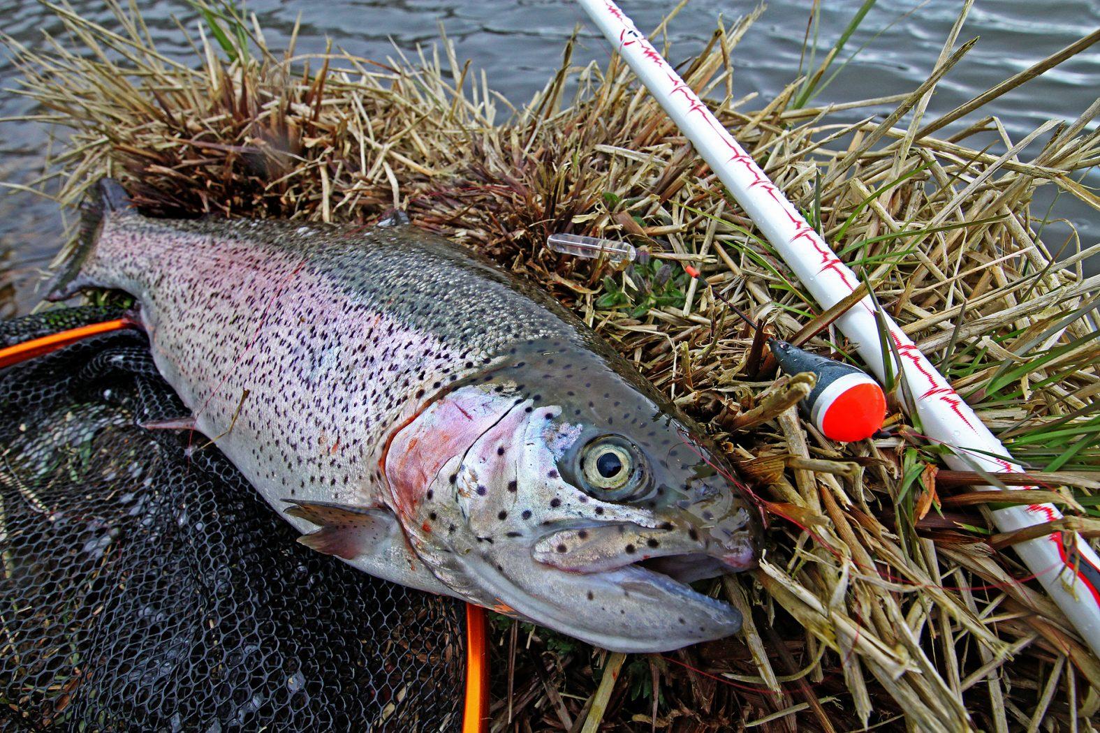 Wie funktioniert Tremarella angeln