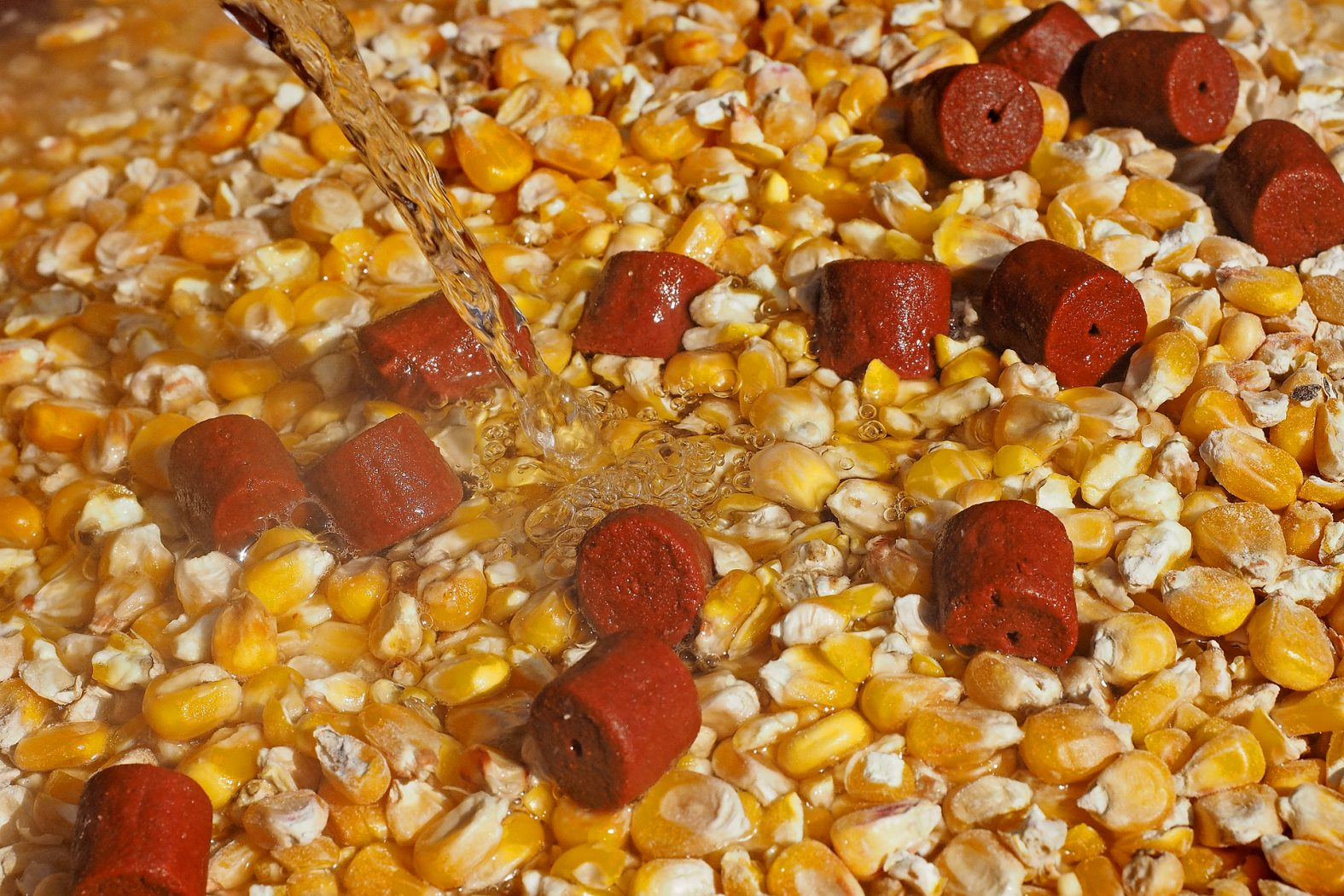 Mais zum Angeln vorbereiten