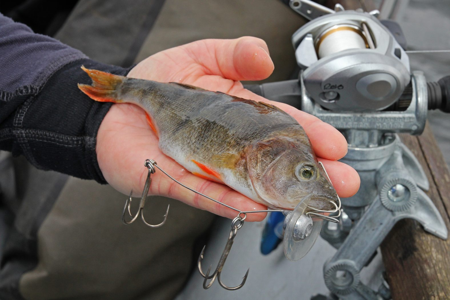 Schleppen mit Köderfischsystem