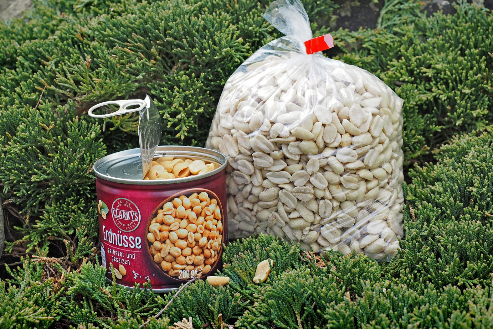 Erdnüsse zum Angeln kaufen