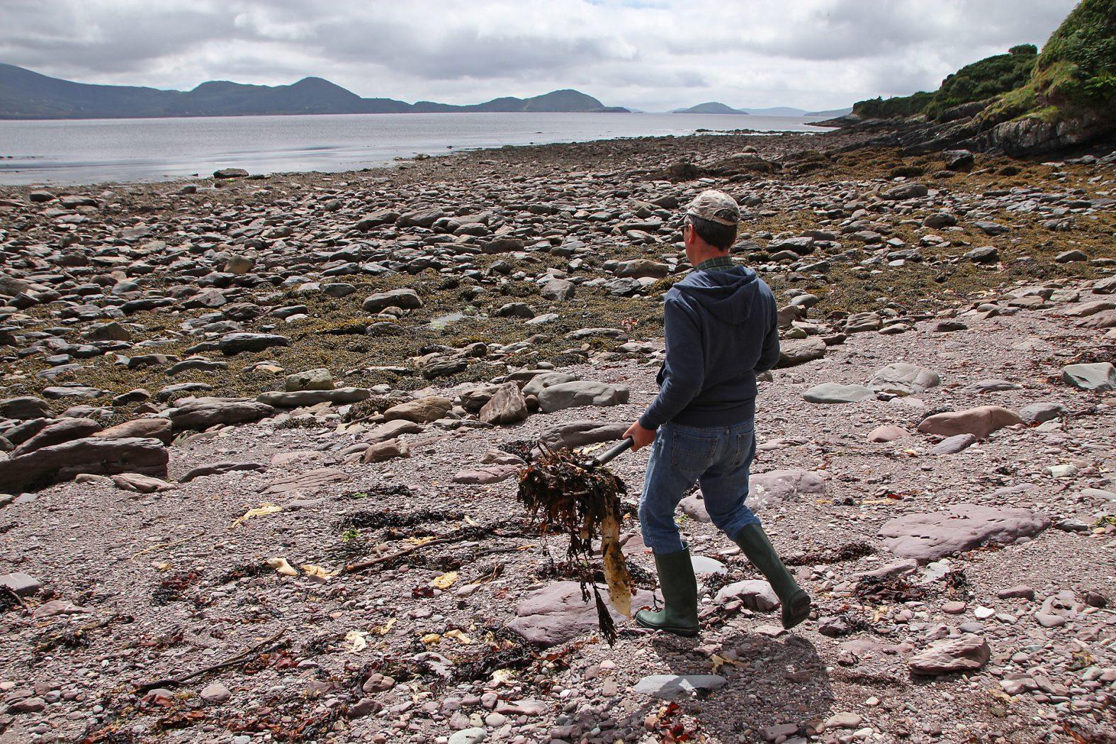 Anfüttern auf Meeräschen an der Küste