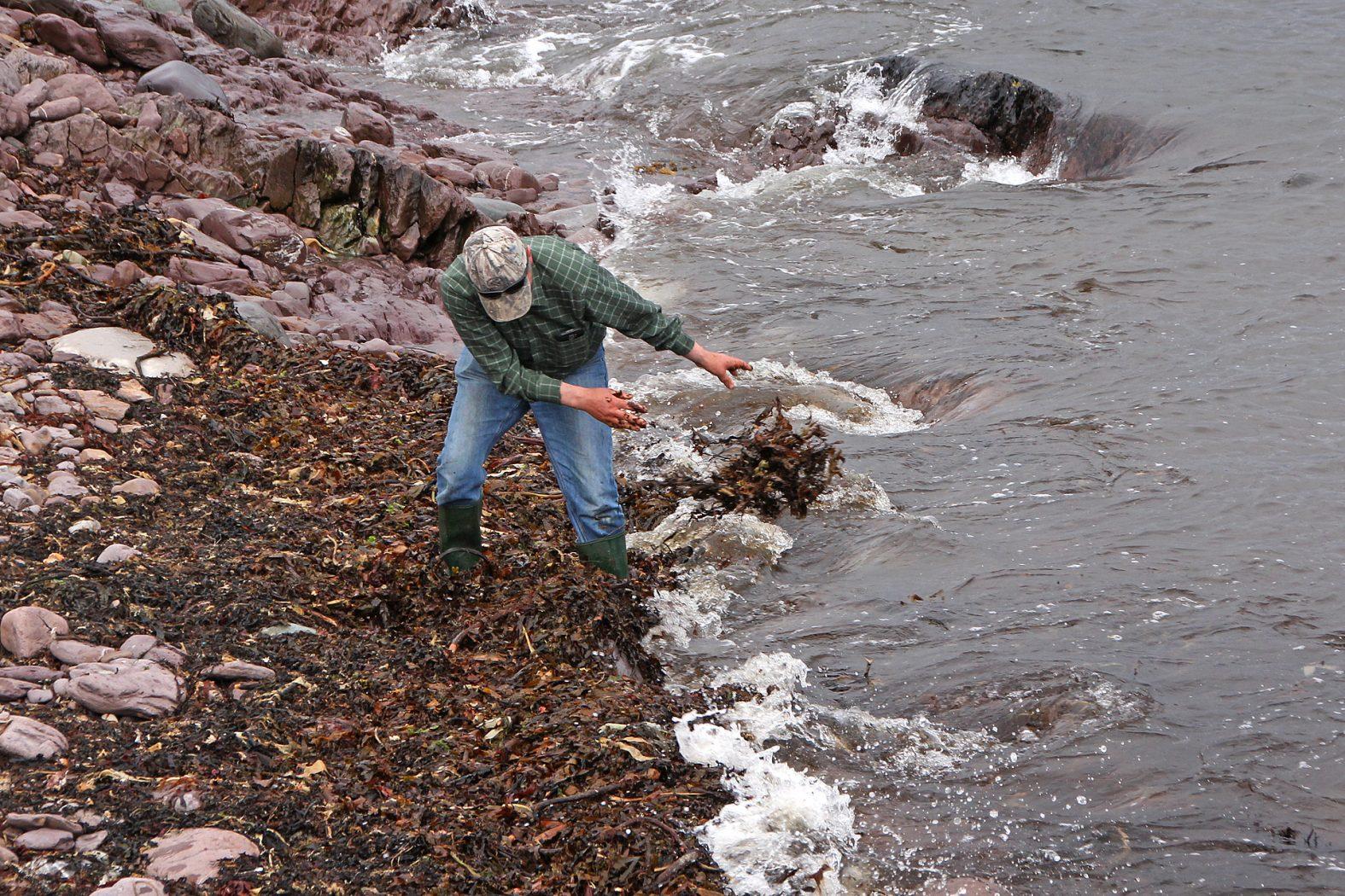 Anfüttern auf Meeräschen