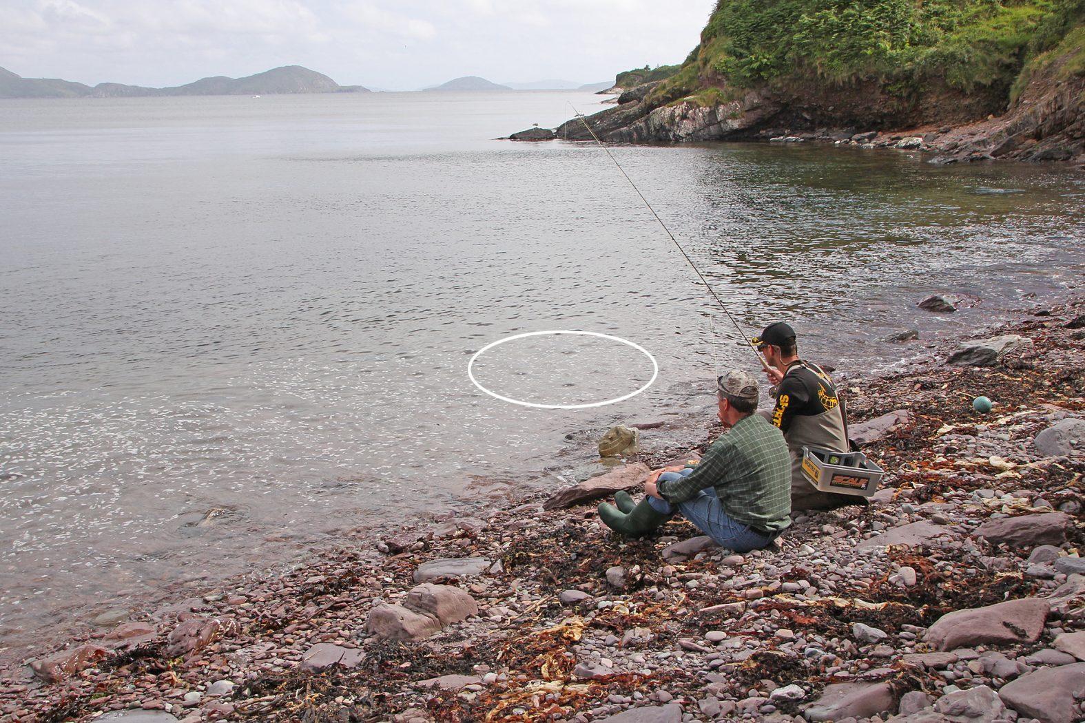 Meeräschen fangen mit der Fliege