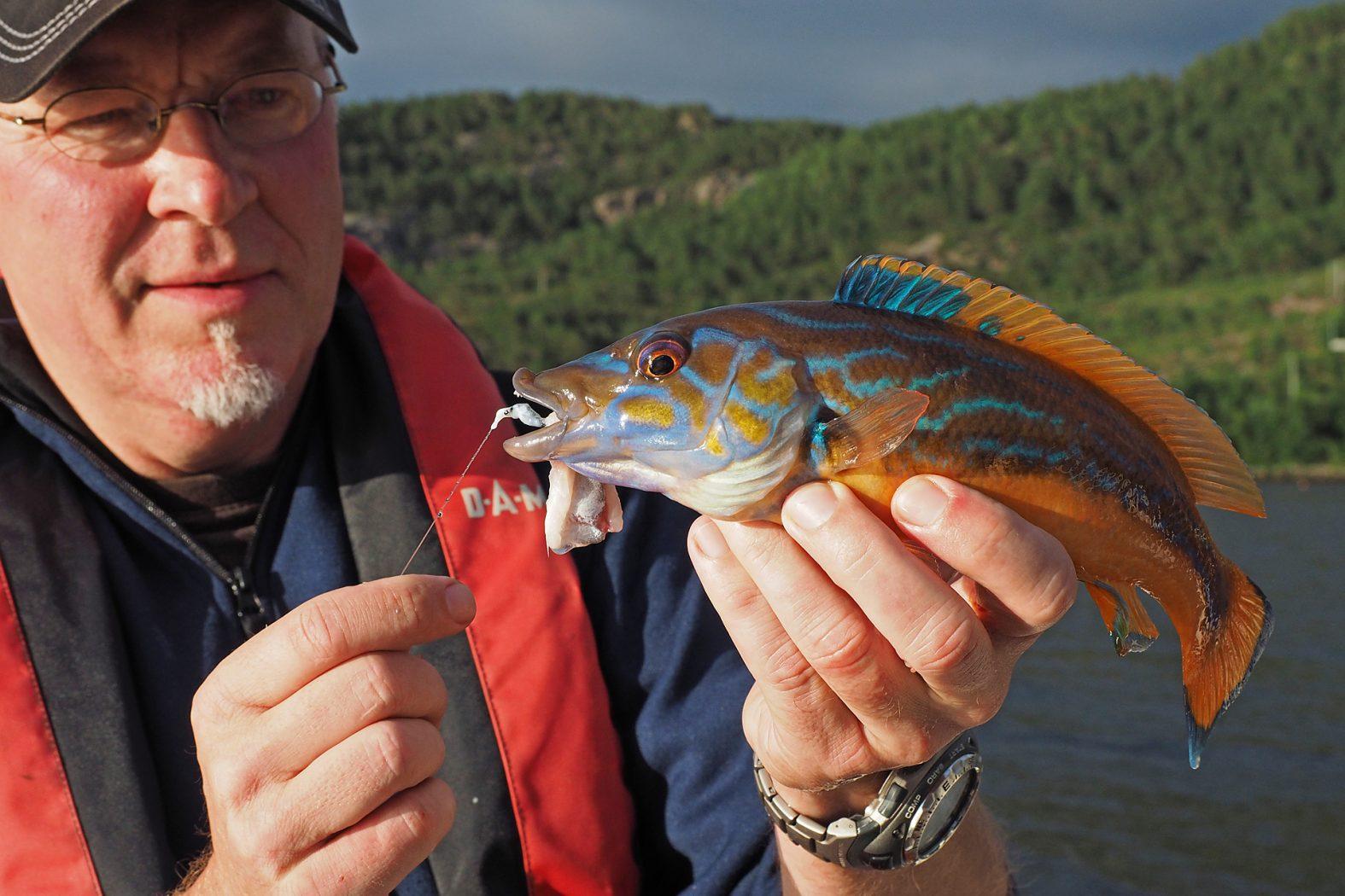 Lippfisch angeln mit Pose
