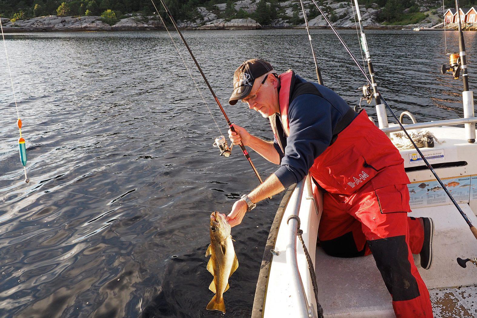 Posenfischen auf Pollack in Norwegen