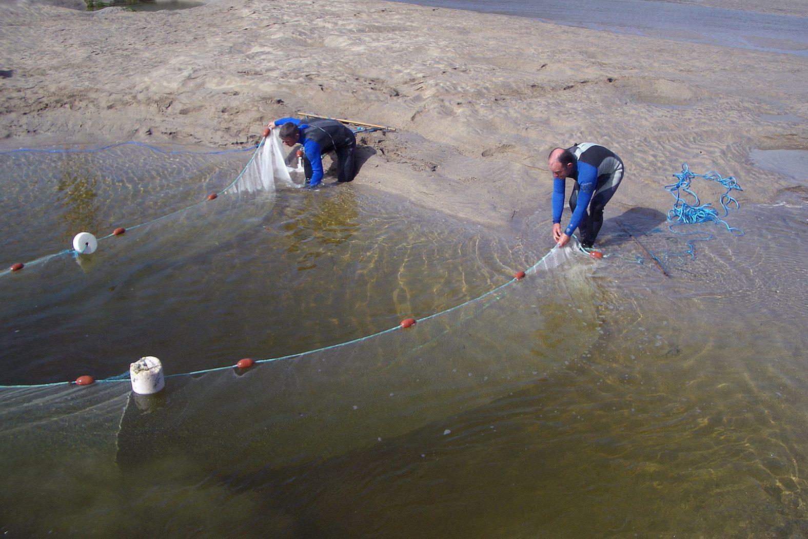 Sandaale fangen mit Netz