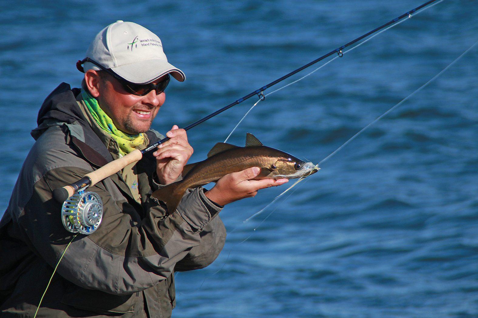 Fliegenfischen auf Pollack an der Küste