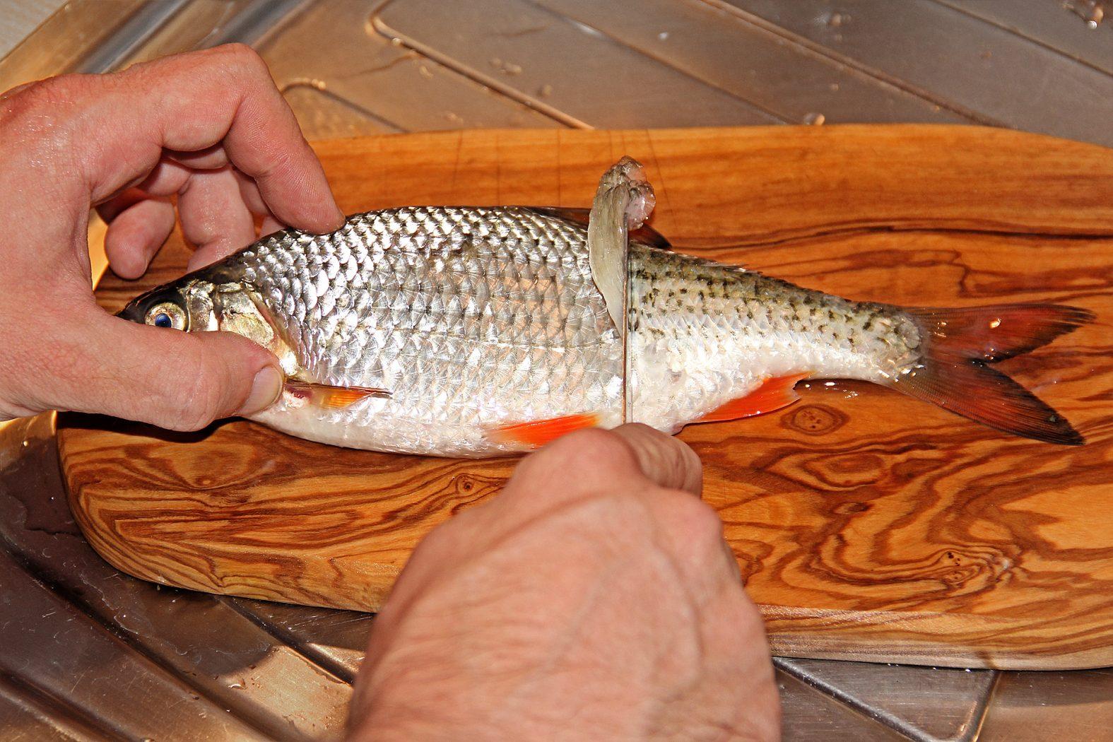 Rotaugen und andere Weißfische braten