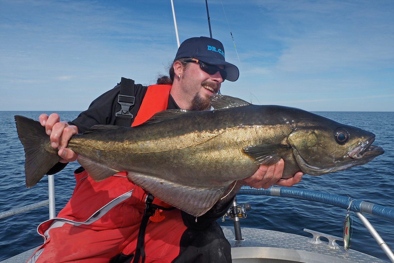Pollack angeln vor Hitra und Frøya